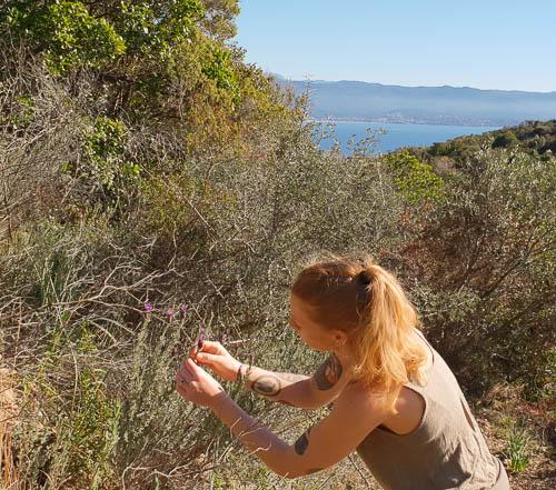 Eva regarde l'avancée de la floraison de la lavande sauvage.