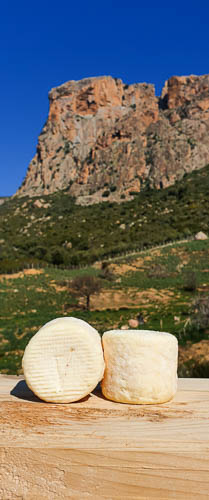 crottins de chèvre Passione sur fond de Mont Gozzi