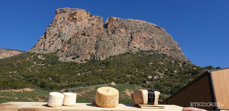 Fromage de chèvres sous le  Monte Gozzi