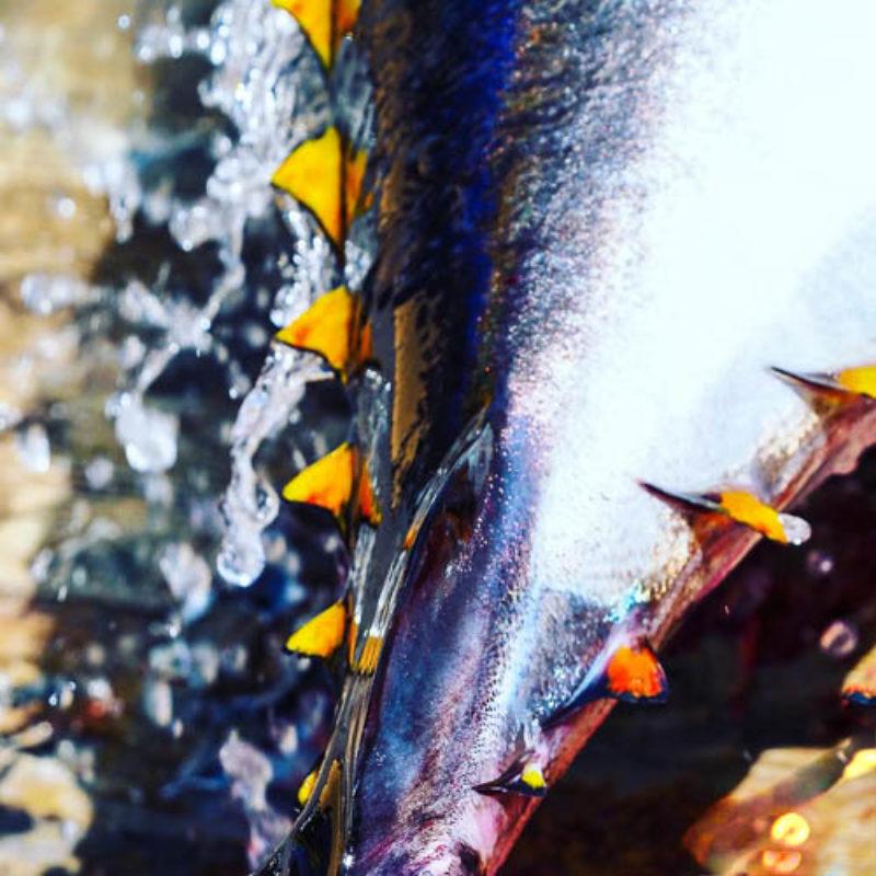 Mare & Gustu, une pêche éthique et responsable sublimée en recettes étoilées.