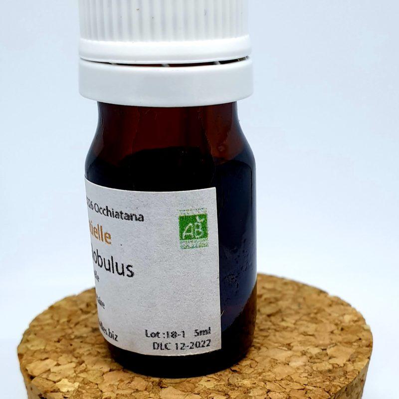 Huile Essentielle Eucalyptus Globulus BIO – Respirez ! –